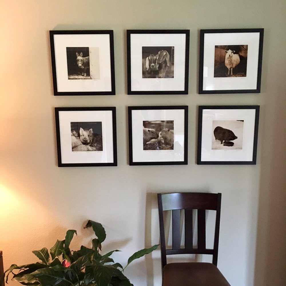 "Customer photo: Six of my small animal photographs from sanctuaries, framed in 1 1/2"" black hardwood"