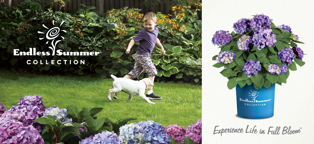 "Bailey's Nurseries ""Endless Summer"" - outdoor Billboard"