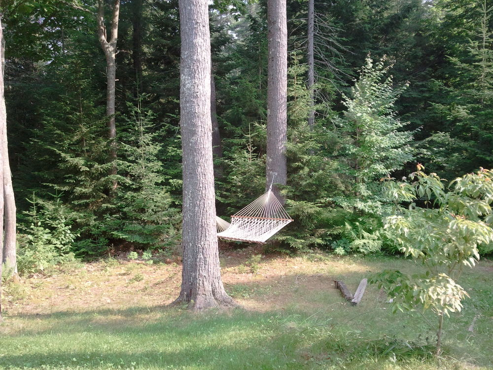 Hammockintrees.06.jpg