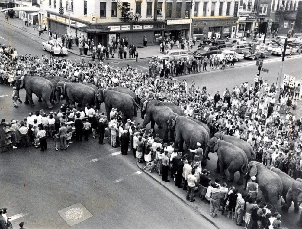 elephant.1.jpg