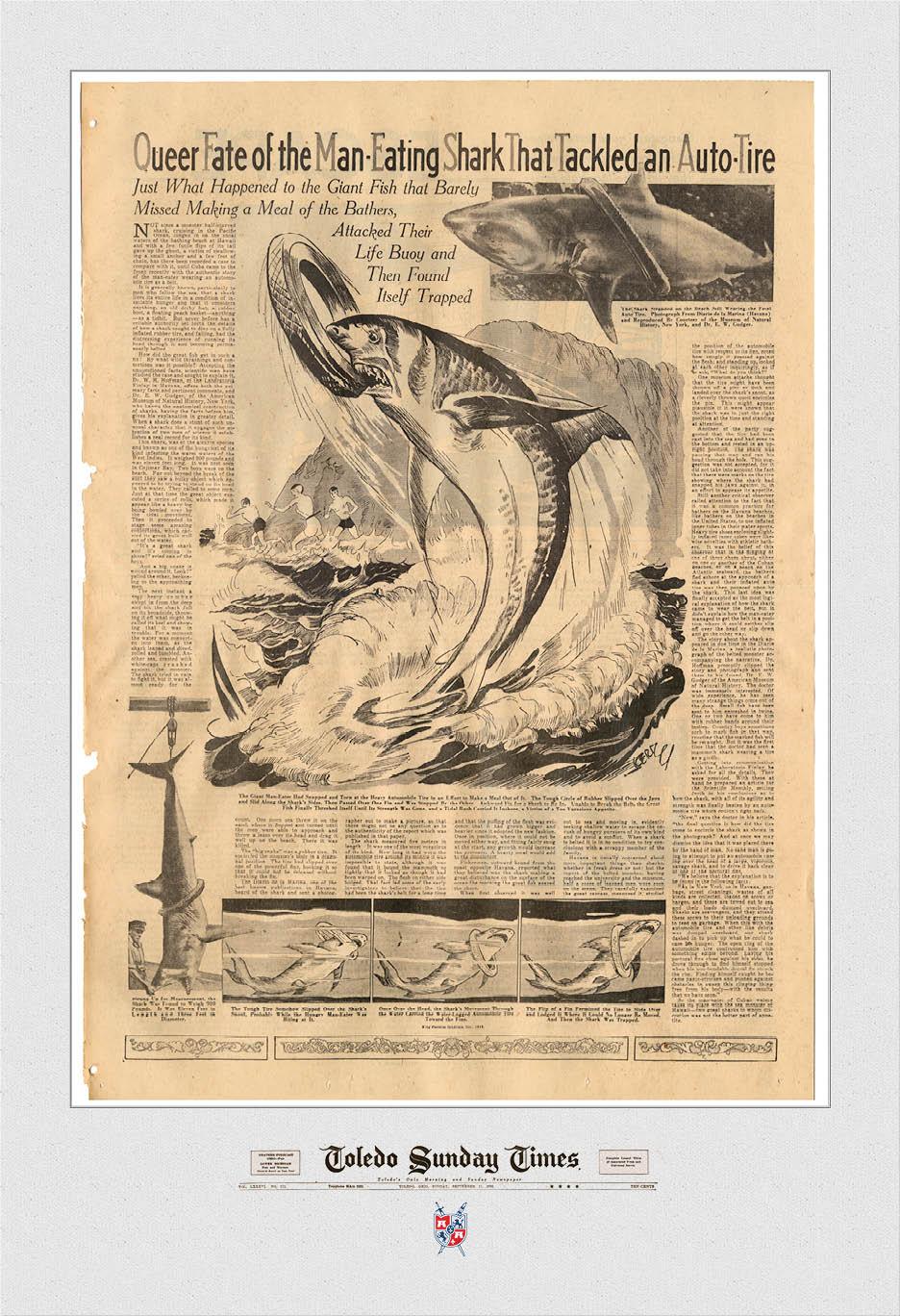 Shark Attack 13x19.jpg
