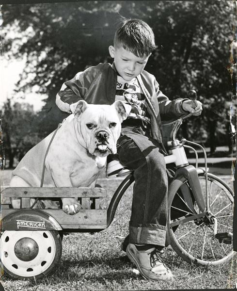 "#mondaymemories: ""A boy and his dog""  Another cute picture of a boy and his dog.  But this isn't just any boy and any dog.  This Blade archive photo from October, 1953, shows Bill Welever pulling the Scott High School mascot in a wagon.  Bill was the son of legendary Scott athlete and longtime athletic director Watson Welever.  The younger Welever turned out to be an All-City League guard for the Woodward football team.  His dad is a City League Hall of Famer whose career spanned five decades, most notably as athletic director at his alma mater from 1952-68. After his standout career at Scott, Watson Welever played football and track and Ohio State University for a season before transferring to Michigan Normal College — now Eastern Michigan University — in Ypsilanti.  #toledoblade #theblade #toledoohio #youwilldobetterintoledo #itmatterswhereyoumakeit #glasscity #history #nostalgia #toledo"