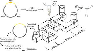 PLoS One Fig 1. DNA assembly in 3D-Printed Fluidics.