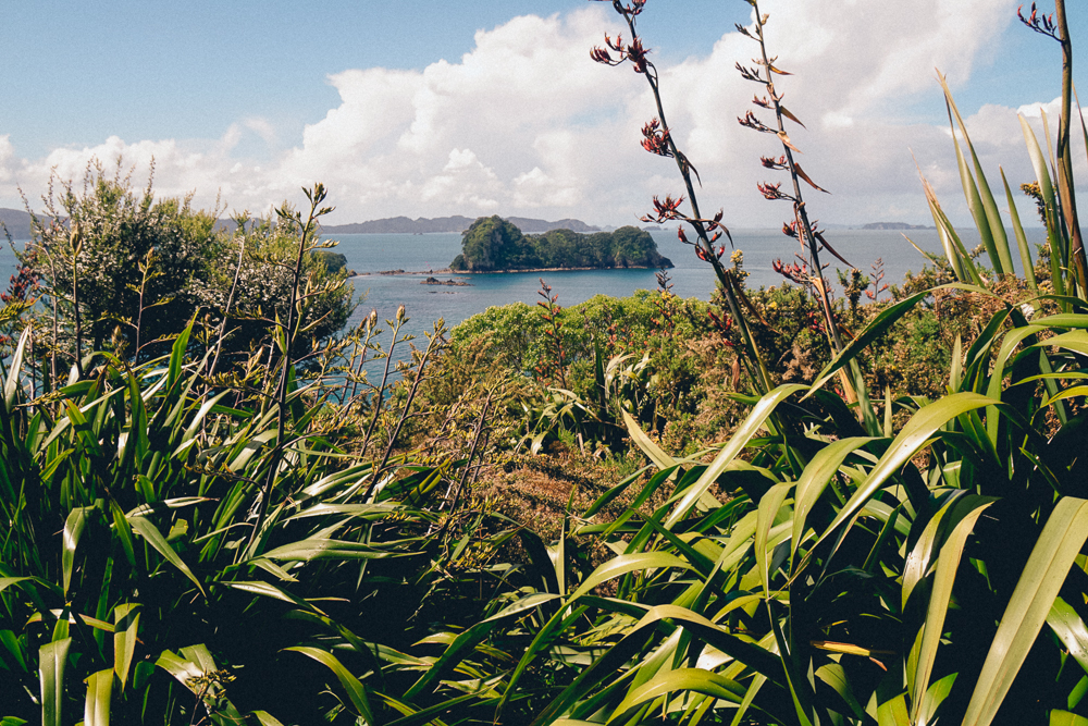 Coromandel, North Island