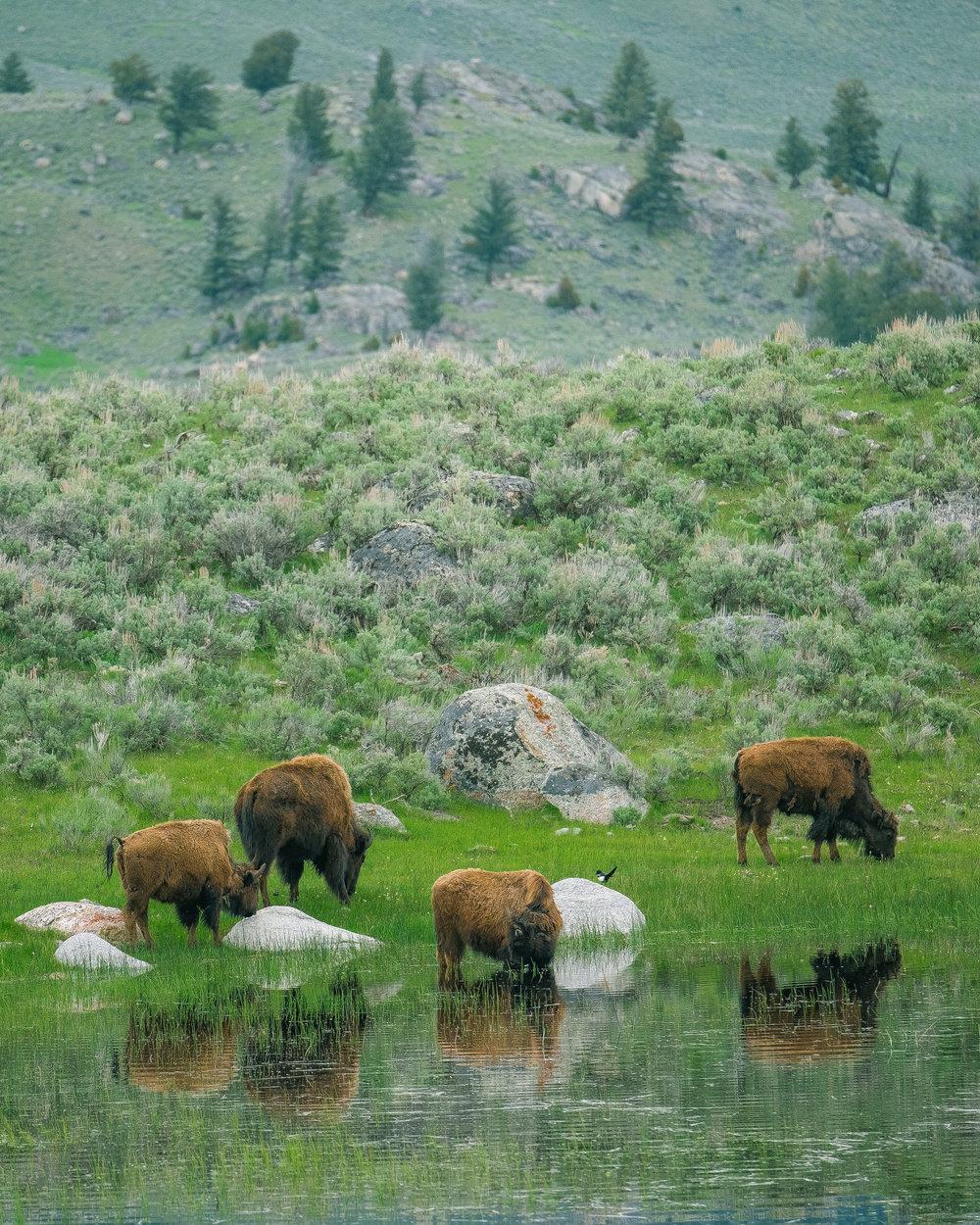 Yellowstone Trip_31.jpg