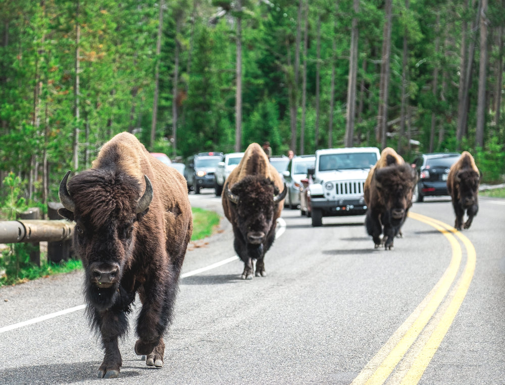Yellowstone Trip_46.jpg