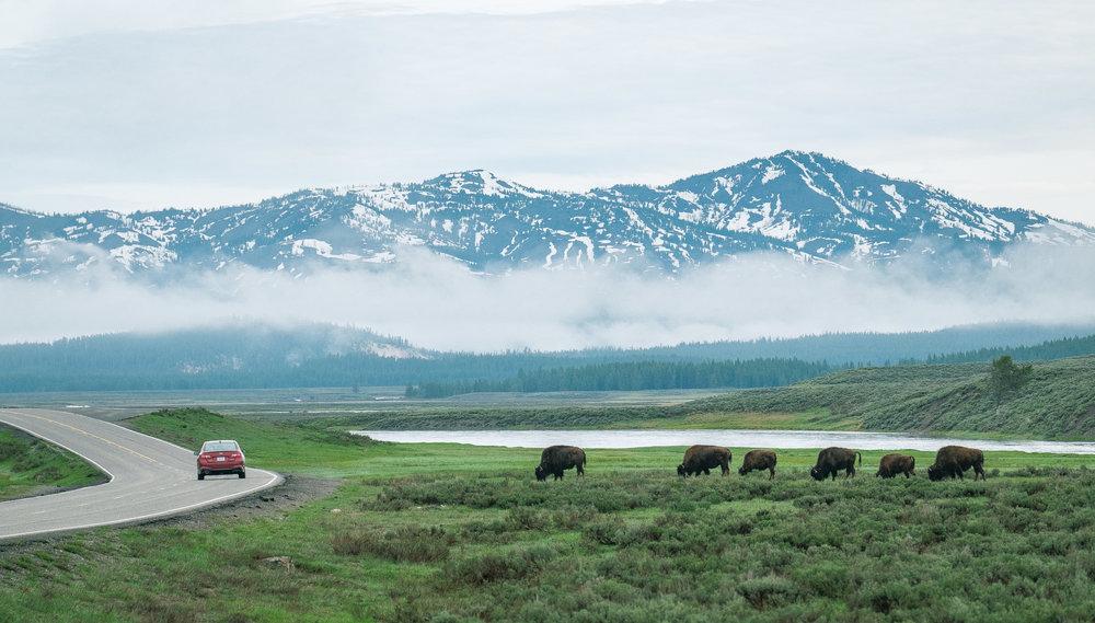 Yellowstone Trip_56.jpg