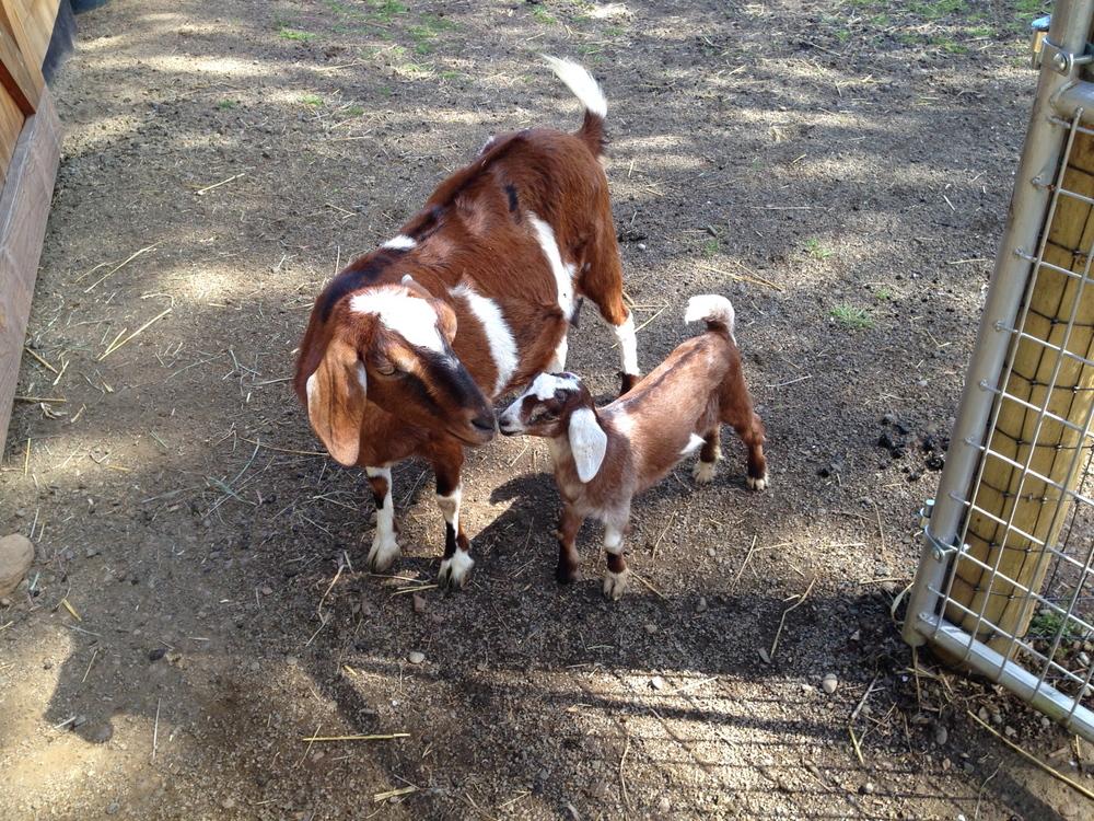 esmie and bessie whenesmie was just a little kid!