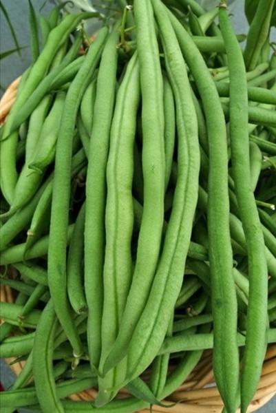 KY pole Beans.jpg