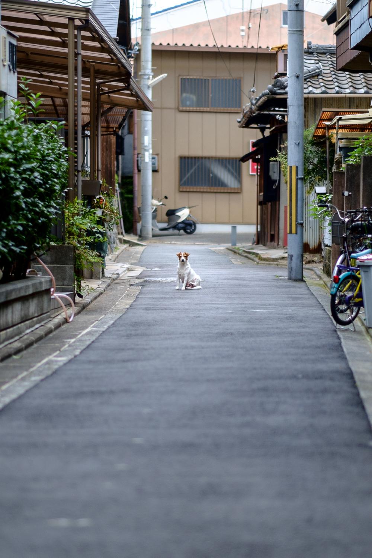 Japan14-32.jpg
