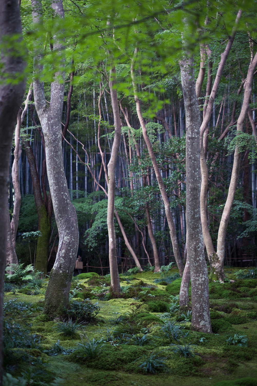 Japan14-36.jpg