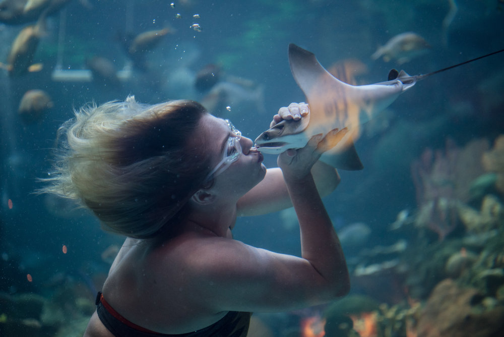 Mermaid Nicole Grant kisses a sting ray during her underwater show at Silverton hotel-casino on Thursday, Aug. 24, 2017, in Las Vegas. Morgan Lieberman Las Vegas Review-Journal