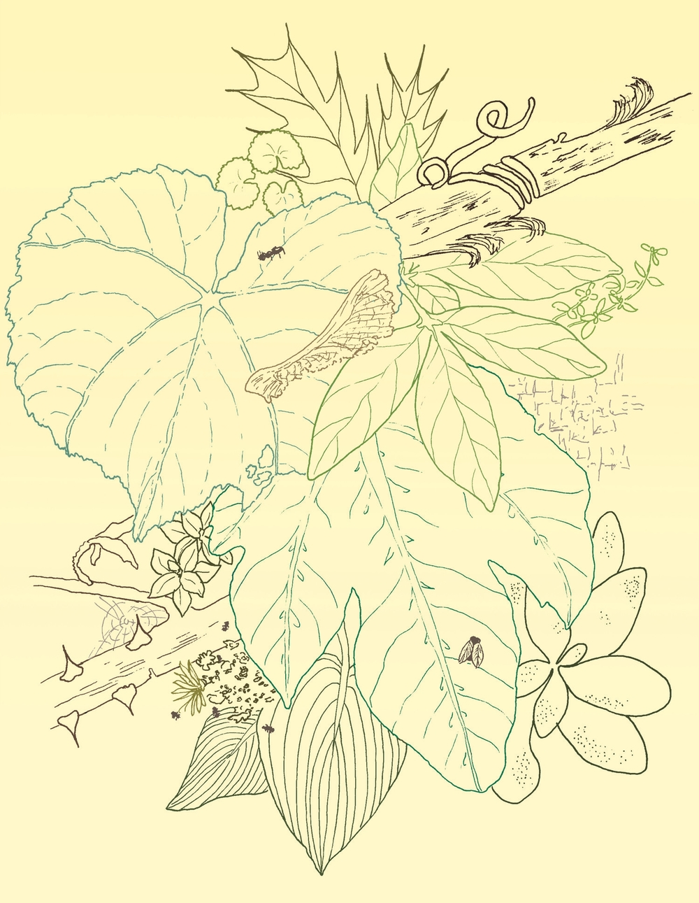 Leaves, Succulents, Sharp Branches