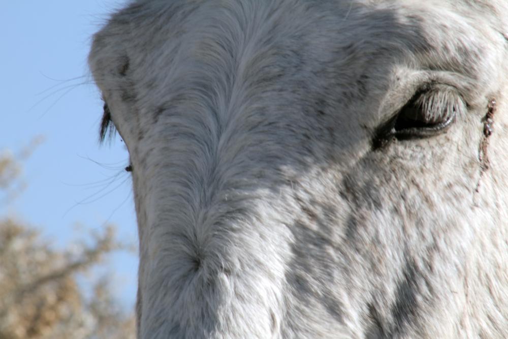 HORSES_04.jpg