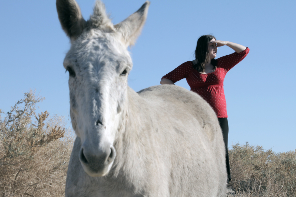 HORSES_ANGELA.jpg