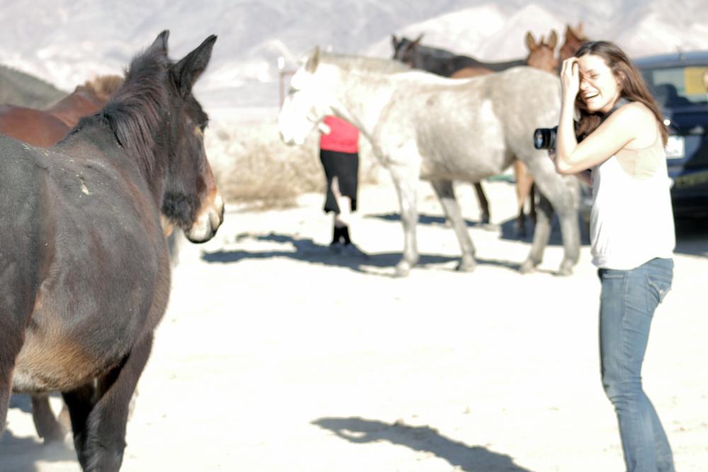 HORSES_KERRY_02.jpg