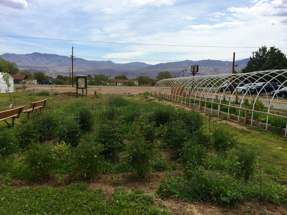 The community garden for the Big Pine Paiute reservation.