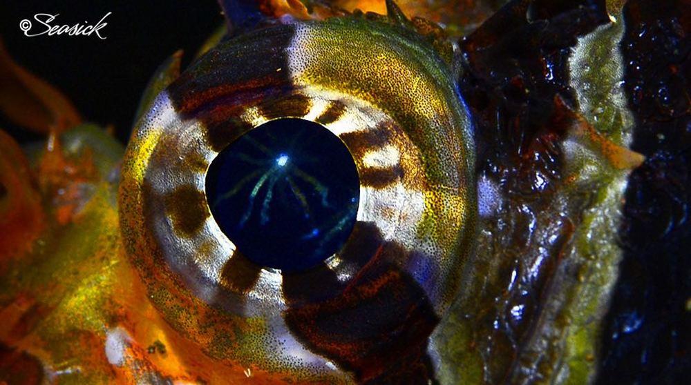 SEASICK WEB BALI14 Lionfish.jpg