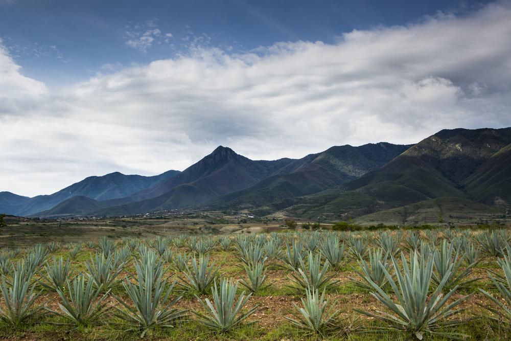 Bizarre_Foods_Oaxaca_Cambria-8784.jpg