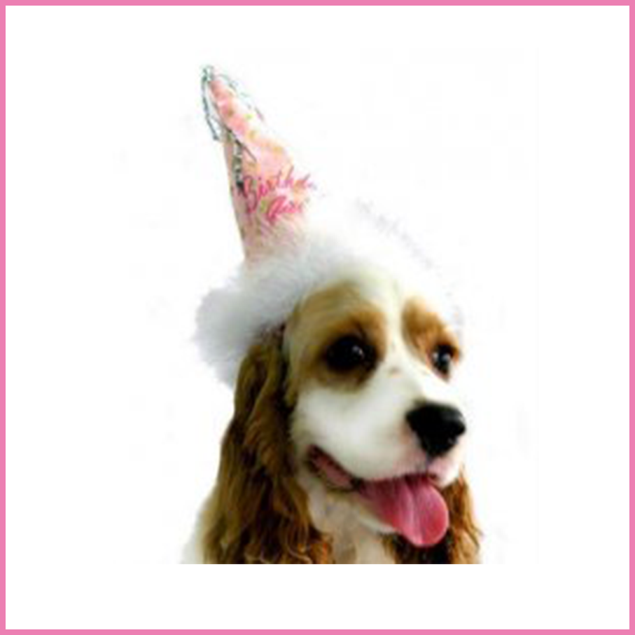Birthday Boy Girl Party Hat DTails Pet Boutique