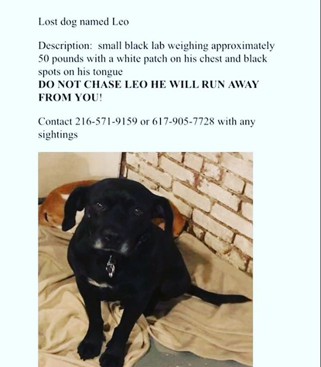 PLEASE SHARE**** Please help us find our friend Leo. He was last seen the evening of July 27 at Carlton Park on the SW Corridor in the South End. Leo is shy with people but loves other dogs Please don't chase after him. Please call Nadine at 217.571.9159 if you see him.  #rescuedogsofinstagram #lostdog #lost #lostdog #dogsofinstagram #dogsofboston #southend #pleaseshare