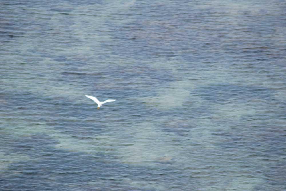 bali-bingin-uluwatu-bird-ocean.jpg