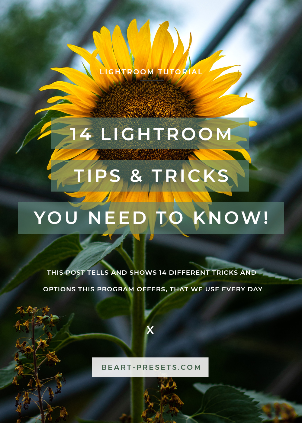 LIGHTROOM TIPS & TRICKS YOU NEED TO KNOW