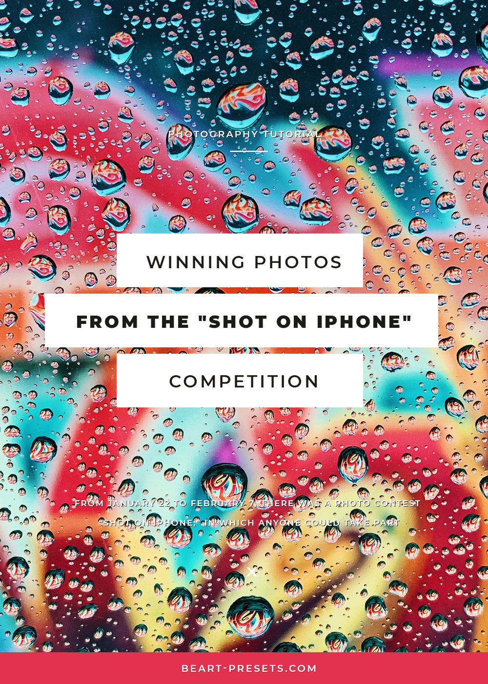Winning Photo from the Shot on iPhone Competition