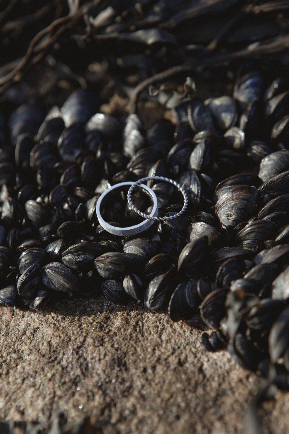 Wedding bands on a blanket of tiny black mussels | New England wedding | Lauren & Tim's wedding | Amy Sims Photography
