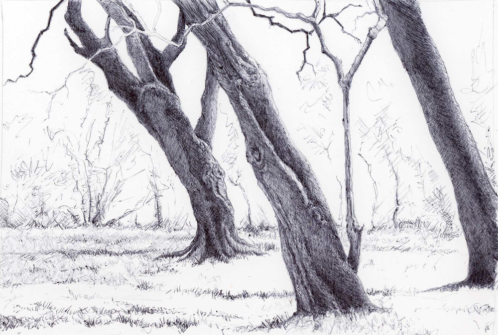 "Park Sentinels, 4"" 6"", ball point pen, 2014"