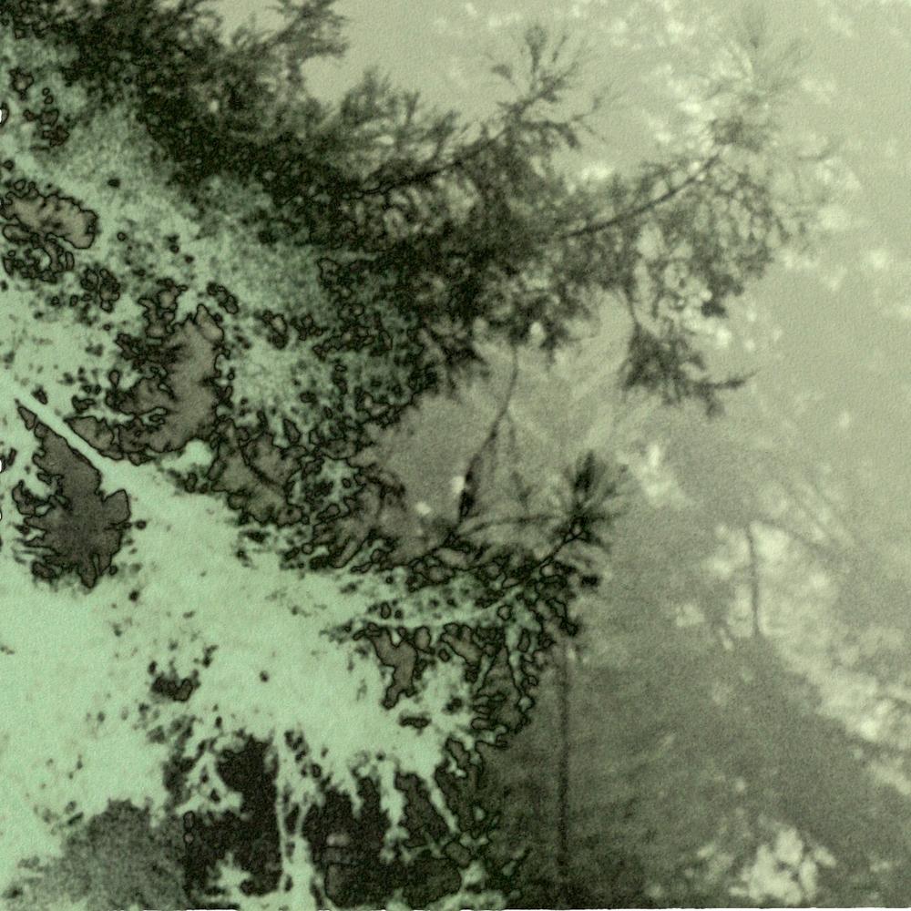 PT redwoods.jpg