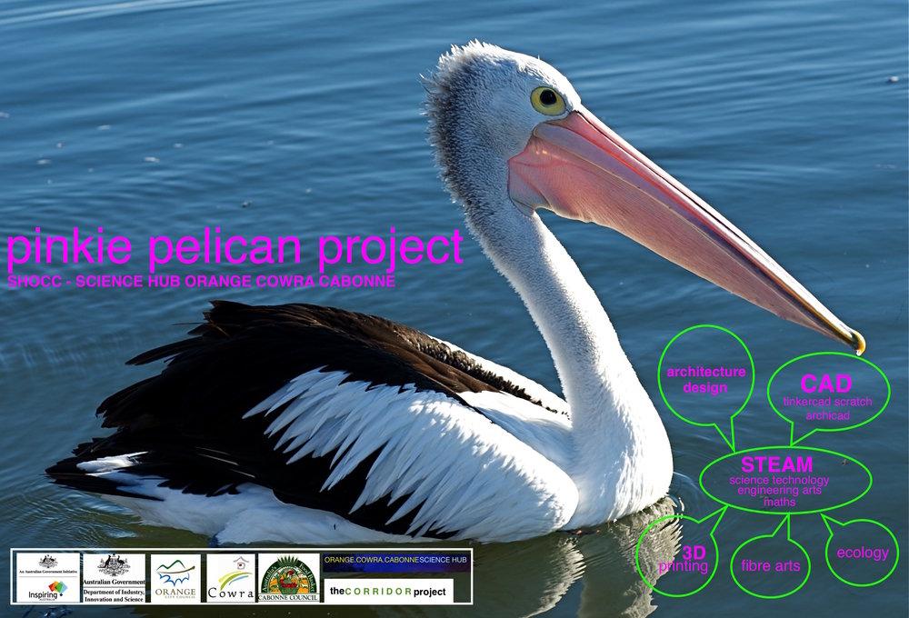 Pelecanus_conspicillatus_-Australia_-8 (1).jpg