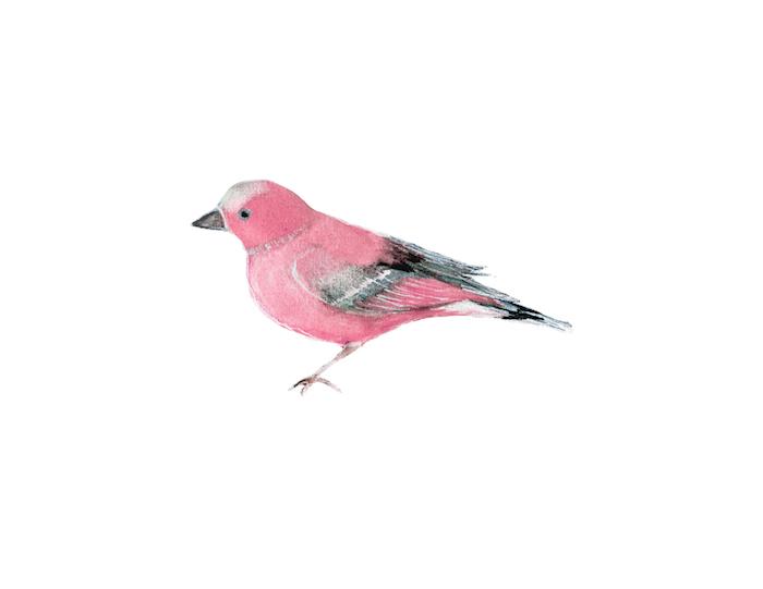 birdPink copy.jpg