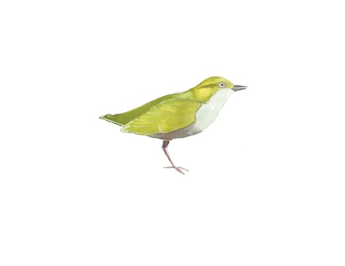 BirdGreen copy.jpg