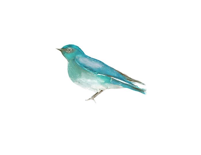 BirdTeal copy.jpg