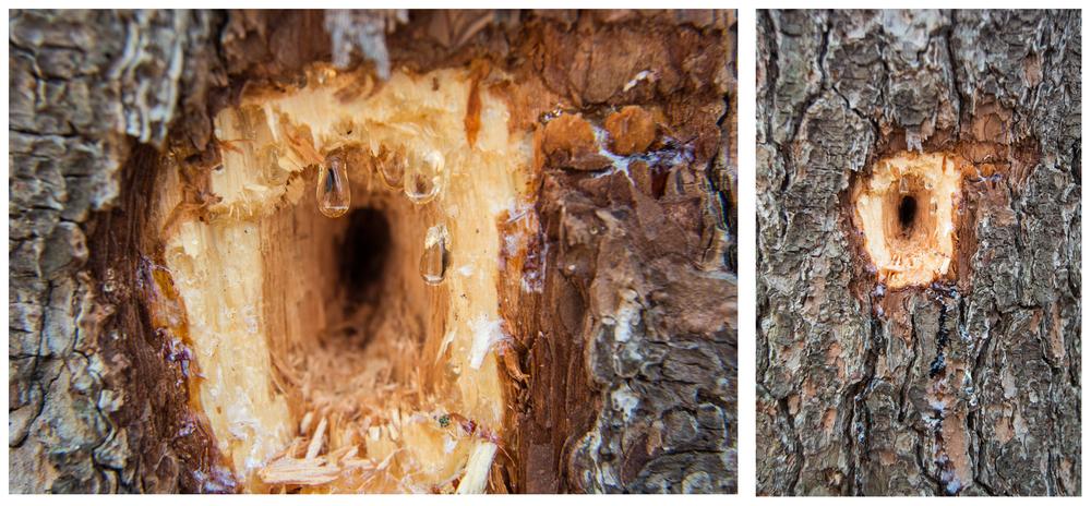 woodpecker hole.jpg