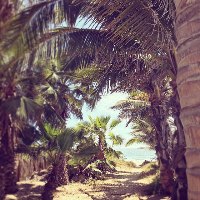 Secret pathways to the beach #justask #wewillshowyoutheway #Todossantos #pescadero #cerritos #alwaysanadventure #havefun #itswhatlifeisallabout #notyourtypicalhotel #secret #beach #lifeisgood #mexico #travelmexico #baja #lifesabeach #dametraveler