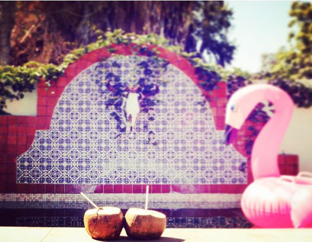 Still time to bring a friend and have more money to spend on pina coladas in a real coconut that was just plucked from our trees!! #thisishowwedosummer #putthelimeinthecoconut #summer #hot #flamingoparty #labohemiabaja #pooltime #poolparty #pinacoladas #coconutmojitos thank you @wonder.for.wander for the great photo