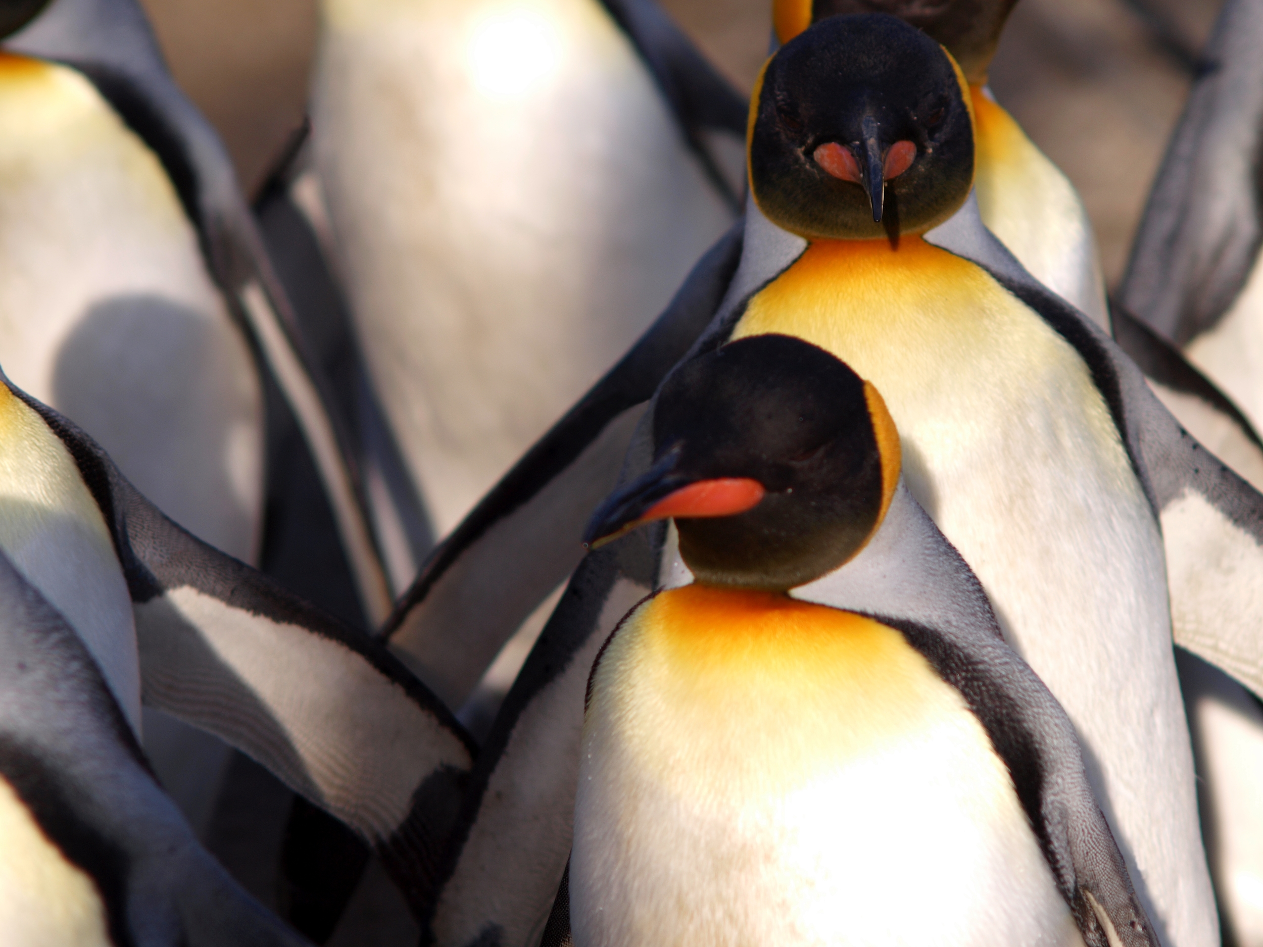 penguin parade, book promotion ideas