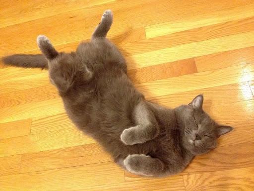 Alyson cat