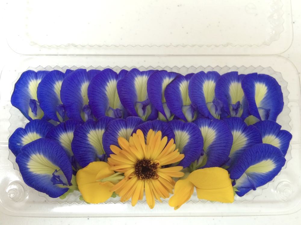 Butterfly Pea assortment