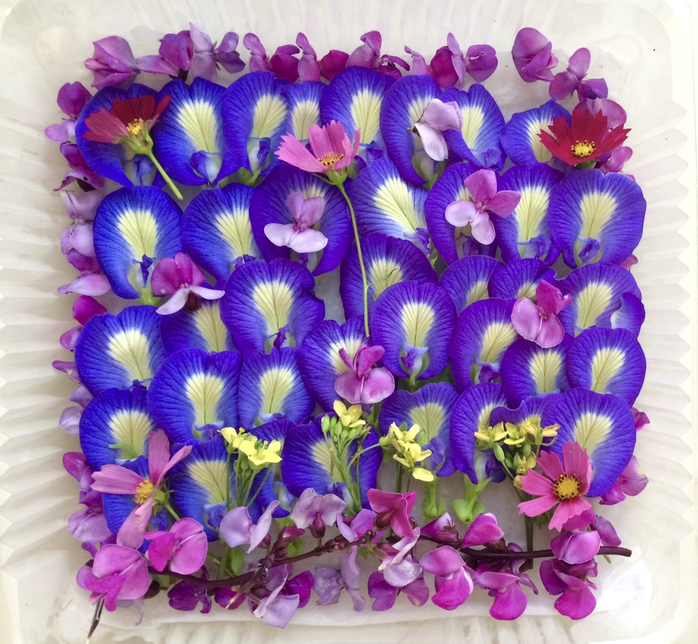 Butterfly Pea assortment 50
