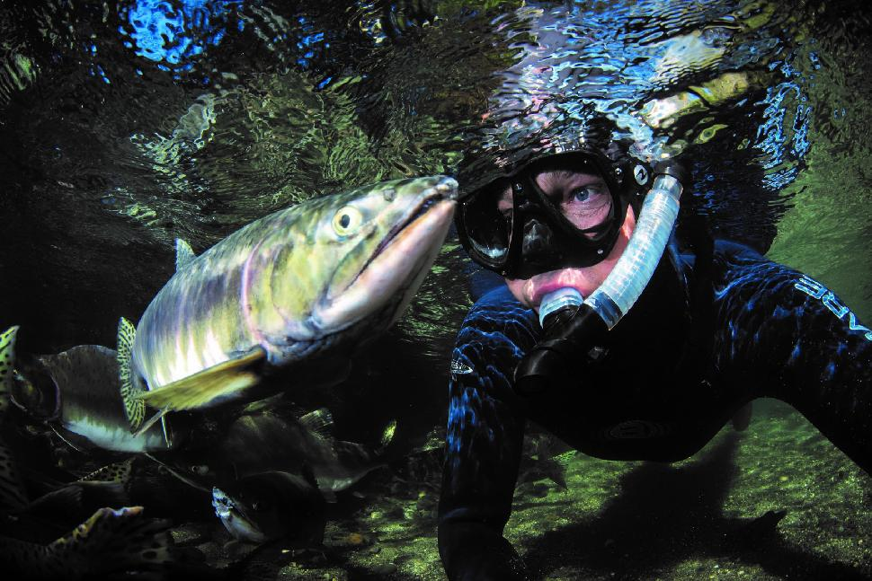 snorkeling with pink salmon.jpg