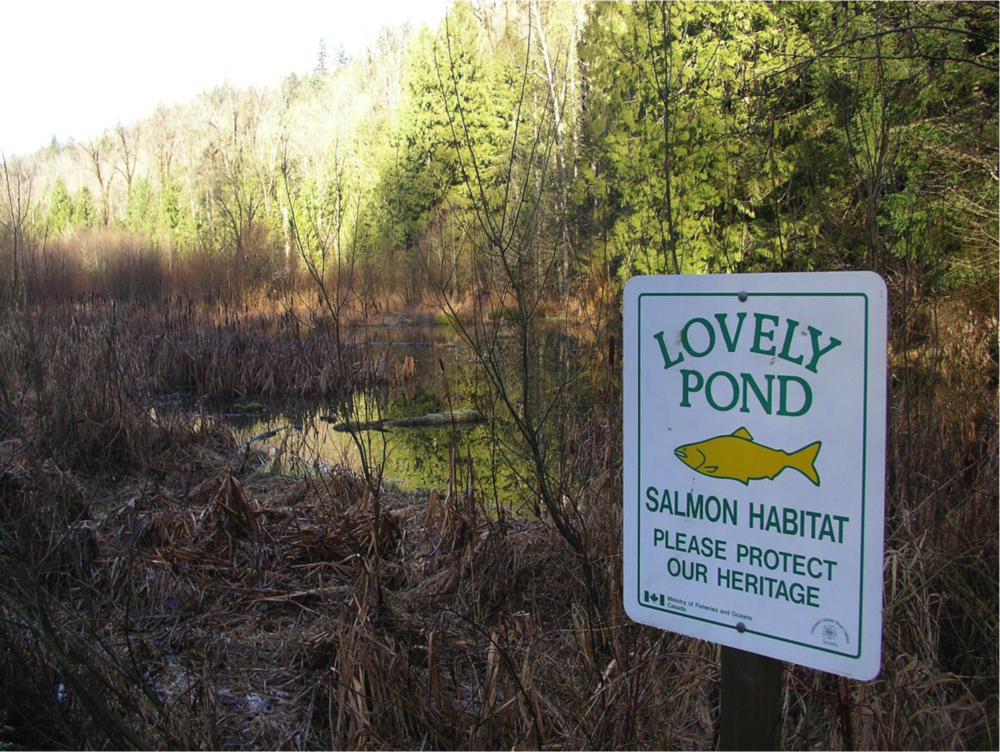 lovely pond OCH.png