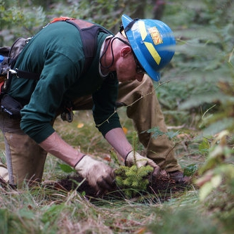 Forestry Field Skills Program -