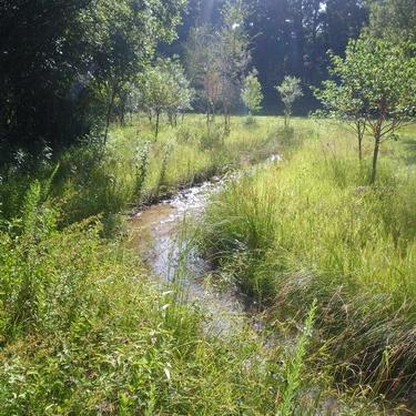 Streambank Restoration -