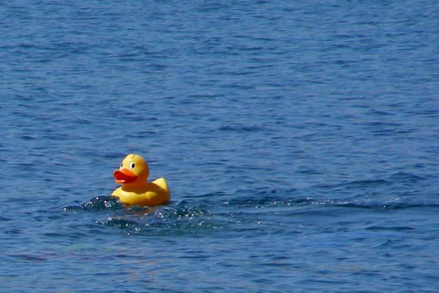Similar floatie