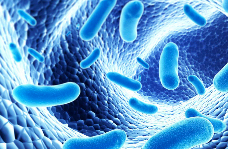 The strain of bacteria whose growth is promoted by fiber is called Clostridia. (This is an animated photo of bacteria and may not reflect the actual image of Clostridia)