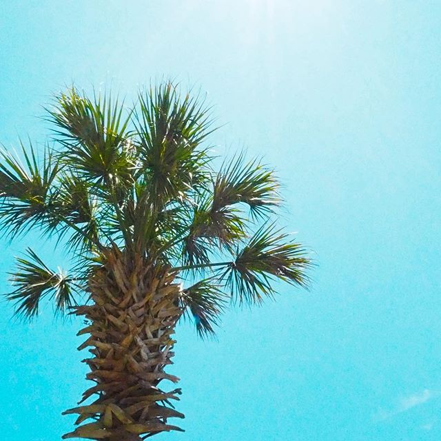 Here's a little palm tree action to brighten up your week 🌴☀️💗 happy hump day . . . . .  #roamtheplanet #travelphotography #visualoflife #beachlife #dametraveler #artofvisuals #islandhopping #flashesofdelight #thecreative #ig_masterpiece #beachvibes #mytinyatlas #naturephoto #main_vision #landscape_captures #awesome_earthpix #natureaddict #rsa_rural #awesomeearth #allnatureshots #instanaturelover #earth_deluxe  #palmtrees #summerdays #beach #summer