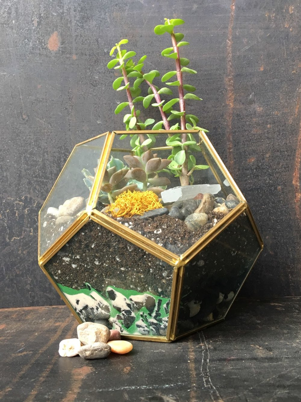 terrarium-class-Logan-Square-Fleur-Inc-Fleur-Workshops